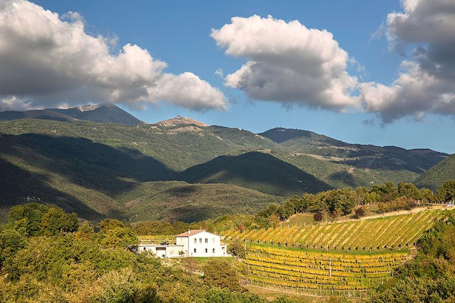 Bellissimo articolo che parla del nostro territorio e dei nostri vini!!!