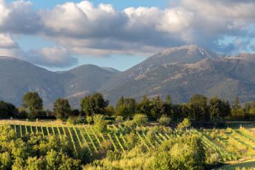 panorama vigneto castelfranco